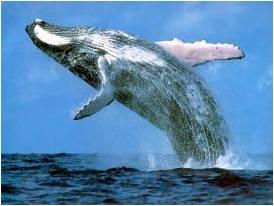 Hermanus Whale Route